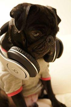 A dog wearing beats! Love it!