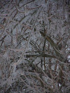 Ice Storm, Southern Illinois