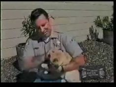 Cat Attack on Live TV  Ouch! This has ALWAYS been my #1 favorite 'crazy cat' video clips...i wonder if this helped him get adopted....