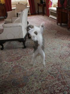 Larry the Cat DANCING at his one year anniversary at No 10 party.
