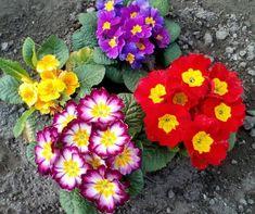 Tattoo Designs, Floral Wreath, Gardening, Wreaths, Decor, Plants, Needlepoint, Floral Crown, Decoration