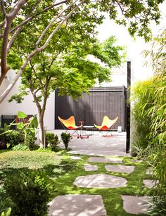Garden Design New Build House creation new zealand limited   hedge replacement   pinterest
