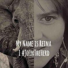 #jointheherd Who will do so with me and many others around the globe? Go to: www.yearoftheelephant.com. Elephants are under tremendous threat in Africa with dozens being killed every day for nothing more than greed and ivory. Not only is their senseless killing a tremendous loss for humankind, but the poaching of these animals is financing war, conflict and terrorism. It is a problem that effects us all - no matter where we are in the world Crime In South Africa, Rhino Poaching, Being In The World, My Name Is, Greed, Documentaries, Finance, Wildlife, African