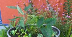 A Colorful DIY Water Garden for Your Patio  www.NeilcyDiaz.com  For All Your Real Estate Needs :)