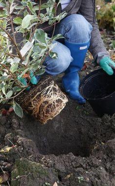 10 tipps zur verwendung von blumenerde und pflanzsubstraten, Hause und garten