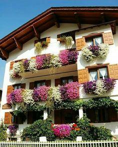 12 x echte tiroler h nge geranien kaufen balkon und. Black Bedroom Furniture Sets. Home Design Ideas
