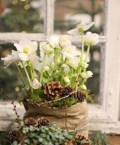 sol fra am. For inne og utebruk Christmas Carol, Frost, Advent, Plants, Tips, Flowers, Noel, Flora, Plant