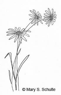 Flower templates and designs come in really handy if drawing is not your strength, or if you just need some new ideas for your arts and crafts projects.