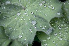 Photograph Chlorophylle by Gaétan Zilli on 500px