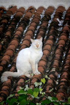 El gato en el tejado