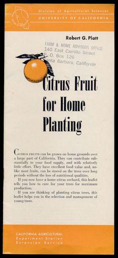 Citrus Fruit For Home Planting, 1963  http://www.amazon.com/gp/product/B01MYXBIY6/ref=cm_sw_r_tw_myi?m=A3FJDCC1SFO8CE