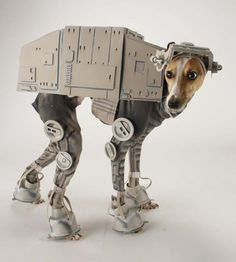 best dog halloween costume EVER.