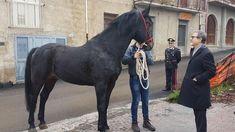 Offerte di lavoro Palermo  Musumeci e il sindaco del piccolo centro sui Nebrodi firmano un'intesa per tutelarlo  #annuncio #pagato #jobs #Italia #Sicilia Messina cavallo sanfratellano a rischio estinzione