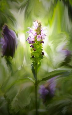 Stay Centered - photograph by Belinda Greb. Fine art prints and posters for sale. Green And Purple, Shades Of Green, Olive Green, Thing 1, All Things Purple, Sale Poster, World Of Color, Art Themes, Flower Pictures