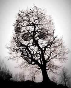 Skull Tree, could be