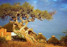 👣 The ONE and ONLY GocheGanas Lodge and Nature Reserve 🌞 Wellness Village close to #windhoek and the international airport #hoseakutako #theexperience #gocheganas #namibia #lodge #nature #wildlife #explore #travel