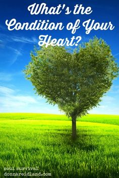 """""""What's the Condition of Your Heart?"""" 2.23 What's the condition of your heart toward God and His Word? Has the truth really penetrated and taken root? Are things that don't matter for eternity preventing real spiritual growth? Is the seed bearing fruit?"""