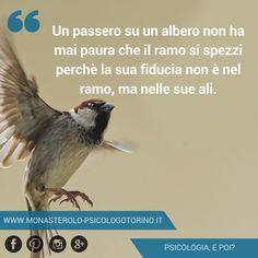 Un passero su un albero non ha mai paura che il ramo si spezzi perchè la sua fiducia non è nel ramo, ma nelle sue ali. #Aforismi