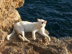 Gato de Cadiz