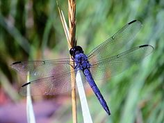 Dragonfly Photography Print Nature Hiking Camping by FieldSketch, $15.00