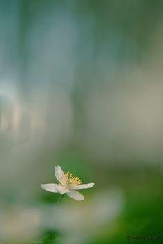 Incanto Images Fotografie