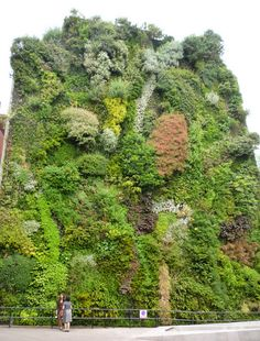 Madrid's Green Wall is Flourishing as is the Caixa Forum : TreeHugger