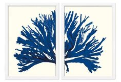 Miranda Baker, Blue Coral Diptych