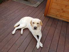 Hunde Foto: Melanie und Odin - Sonnenstrahlen genießen Hier Dein Bild hochladen: http://ichliebehunde.com/hund-des-tages  #hund #hunde #hundebild #hundebilder #dog #dogs #dogfun  #dogpic #dogpictures