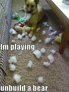 animal captions Ideas funny dogs with captions make me laugh animal pics for 2019 Funny Cute, Funny Humor, Dog Humor, Funny Stuff, Dog Funnies, Memes Humor, Funny Pranks, Funny Sayings, Funny Animal Pictures