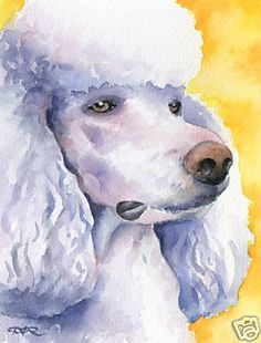 Black POODLE AT THE BEACH Dog Watercolor 11 x 14 Art Print by Artist DJR