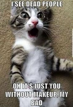 Can anything brighten a day quite like a funny cat? Here is the latest collection of funny cat memes and grumpy cat meme that can blow your mind. Funny Grumpy Cat Memes, Funny Animal Jokes, Cute Cat Memes, Cute Funny Animals, Cute Baby Animals, Funny Pet Quotes, Pet Memes, Best Cat Memes, Funny Memes