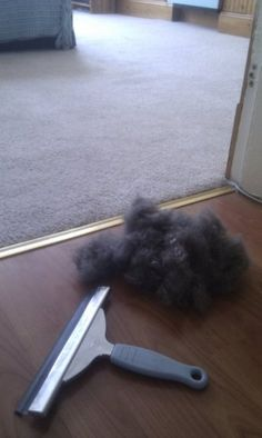 Pull Stubborn Pet Hair from Carpets with a Window Squeegee ( http://lifehacker.com/5948514/pull-stubborn-pet-hair-from-carpets-with-a-window-squeegee )