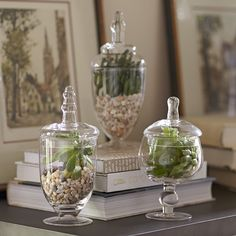 Found it at Birch Lane - Apothecary Jar Set. I usually use apothecary jars in the bathroom, kitchen or at Christmas, but this is a very creative way to use them all year around. Air plants would also be nice in them. Decorative Objects, Decorative Pillows, Vase Haut, Apothecary Jars Decor, Decoration Plante, Centerpieces, Table Decorations, Thanksgiving Decorations, Graduation Decorations