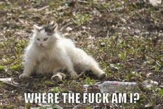 OMFG. idk man... i literally just cried from laughing so hard. that cat had one rough night