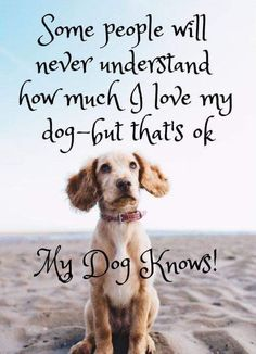 Dog Quotes Love and Loyalty HappyDog.Shopping Your dog is a - Funny Dog Quotes - Dog Quotes Love and Loyalty HappyDog.Shopping Your dog is a member of your human family and may even have a family of his or her own. Dog Quotes Love, Dog Quotes Funny, Quotes About Dogs, Best Dog Quotes, Quotes For Dogs, Pet Quotes, A Girl And Her Dog Quotes, Dog Qoutes, Family Quotes