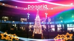 fot. Robert Jagusiak #christmastree #christmaslights
