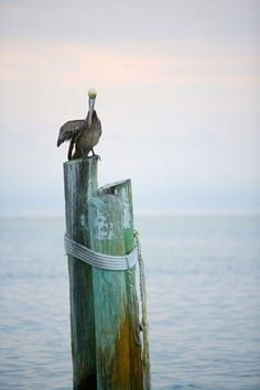 """""""Pelican Post"""" contemporary wall art by Christopher Ross for GreenBox Art + Culture $139"""