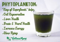Phytoplankton beneftis for cell health liver health brain and heart health energy and more What is Marine Phytoplankton   Benefits & Uses