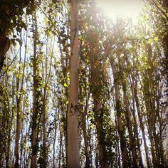 Bosque en #MiZiudad #igerszgz