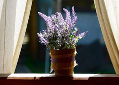 You should have these plants in the bedroom – Growing Lavender Gardening - Growing Plants at Home Faux Plants, Green Plants, Lavender Plants, Growing Lavender, Best Air Filter, Plantas Indoor, Best Indoor Plants, Bedroom Plants, Fun To Be One