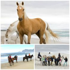 I Love Hermanus - Life & news Hermanus and the Overberg Stuff To Do, Things To Do, Great White Shark, Whale Watching, My Land, Day Trips, Mountain Biking, Diving, Equestrian