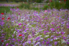 At heart, I'm really a 'colourist' - it's my starting point for planting design