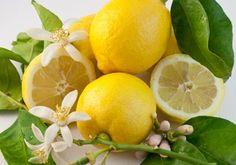 Deko: Arrangement Zitronen