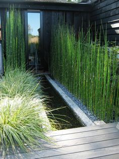 Rill planting (From Rae Wilkinson Design Ltd)