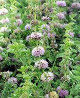 Cómo hacer 10 Fungicidas y pesticidas naturales y caseros para el jardín - Vida Lúcida