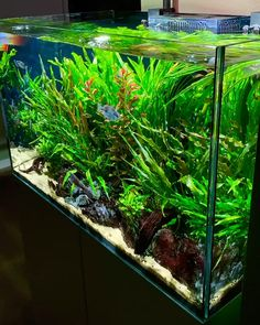 Aquarium Care for the Freshwater Guppy Guppies are maybe the most popular type of freshwater fish to keep in a fish tank. Turtle Aquarium, Tropical Fish Aquarium, Tropical Fish Tanks, Nano Aquarium, Aquarium Fish Tank, Fish Tank Decor, Fish Tank Themes, Biotope Aquarium, Small Fish Tanks