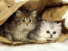 Cats - two cute kittens! So sweet. Bagged em! - Tap the link now to see all of our cool cat collections!