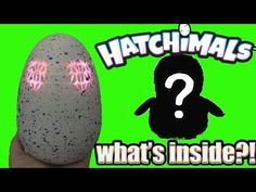 Who Will I Hatch? HATCHIMALS Unboxing What's Inside - YouTube