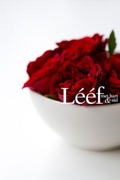 Rooi&Wit/ Red&White Foto: Hanneri de Wet www.leef.co.za