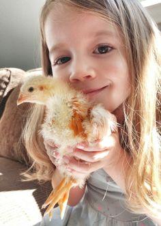 We are sharing our fun Raising Chicks with Kids | Reaching Happy Brooder Box, Raising, Study, Adventure, Chicken, Happy, Fun, Kids, Young Children